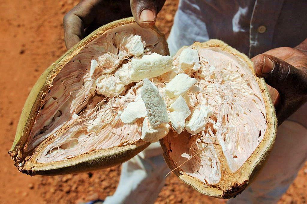 frutto baobab